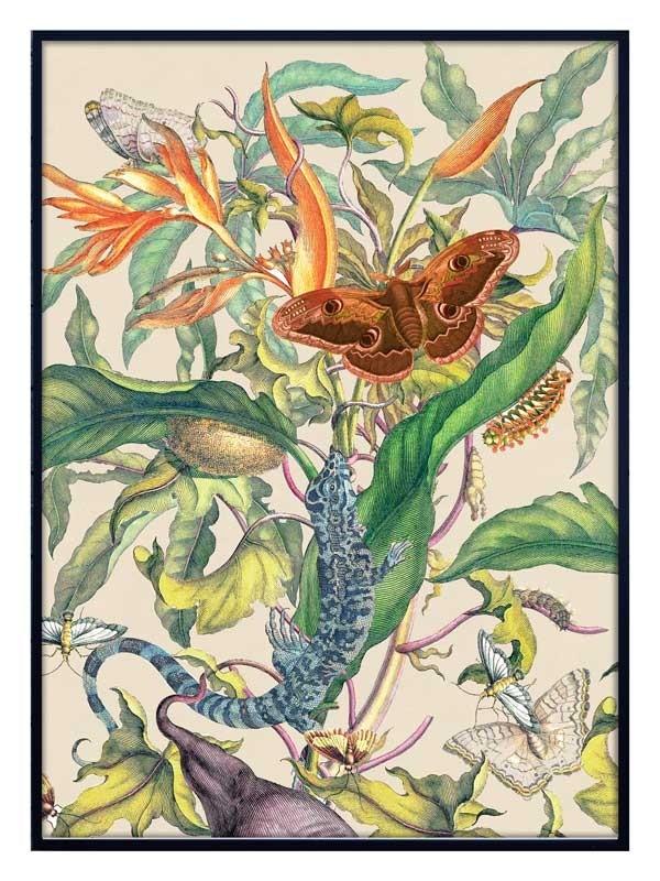 Vanilla Fly Botanical 2 Poster 70x100cm Unframed